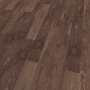Authentic Oak Scarlet Oak